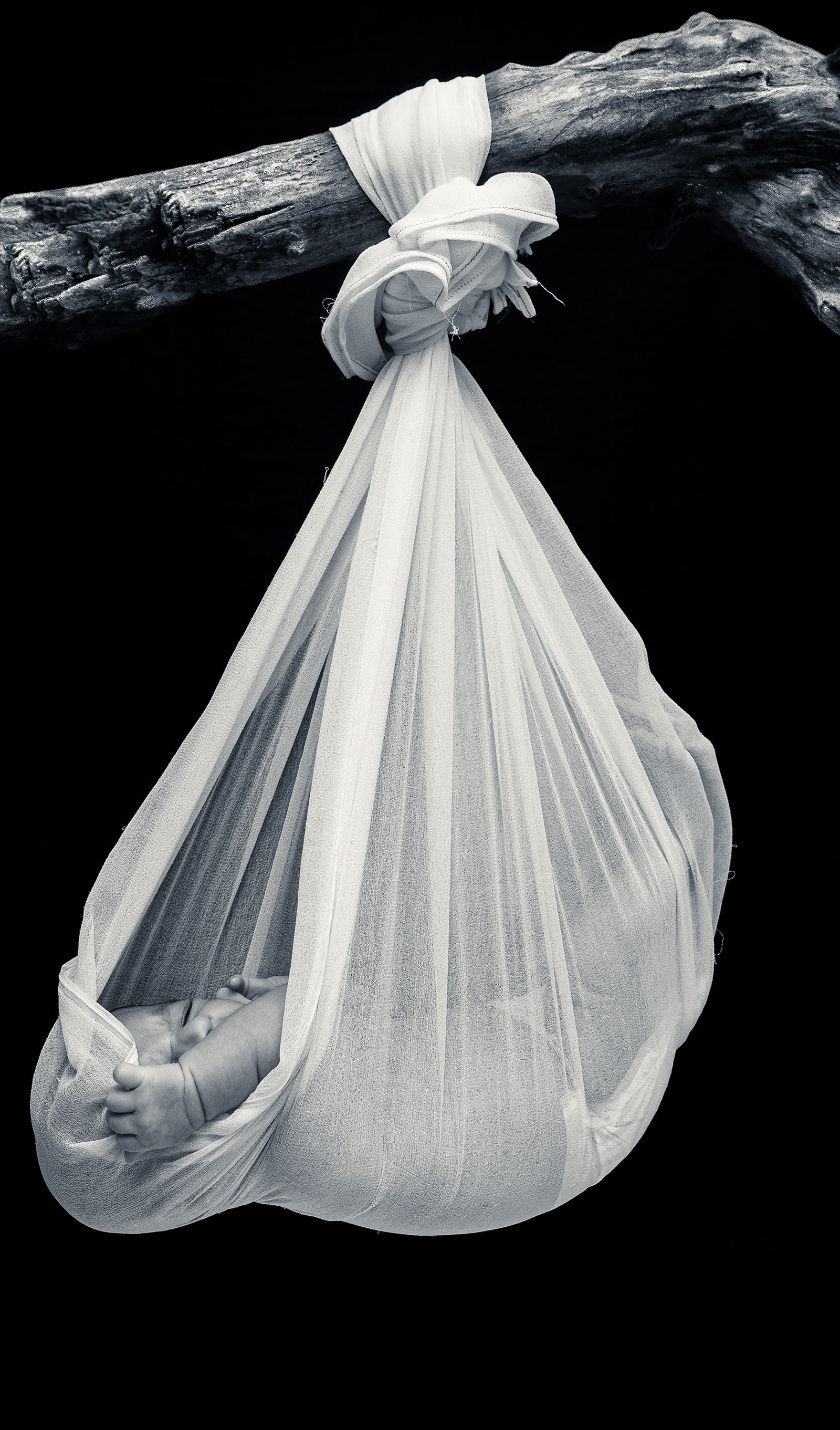 Black and White Shot of Hanging Newborn Baby in Sling from a branch