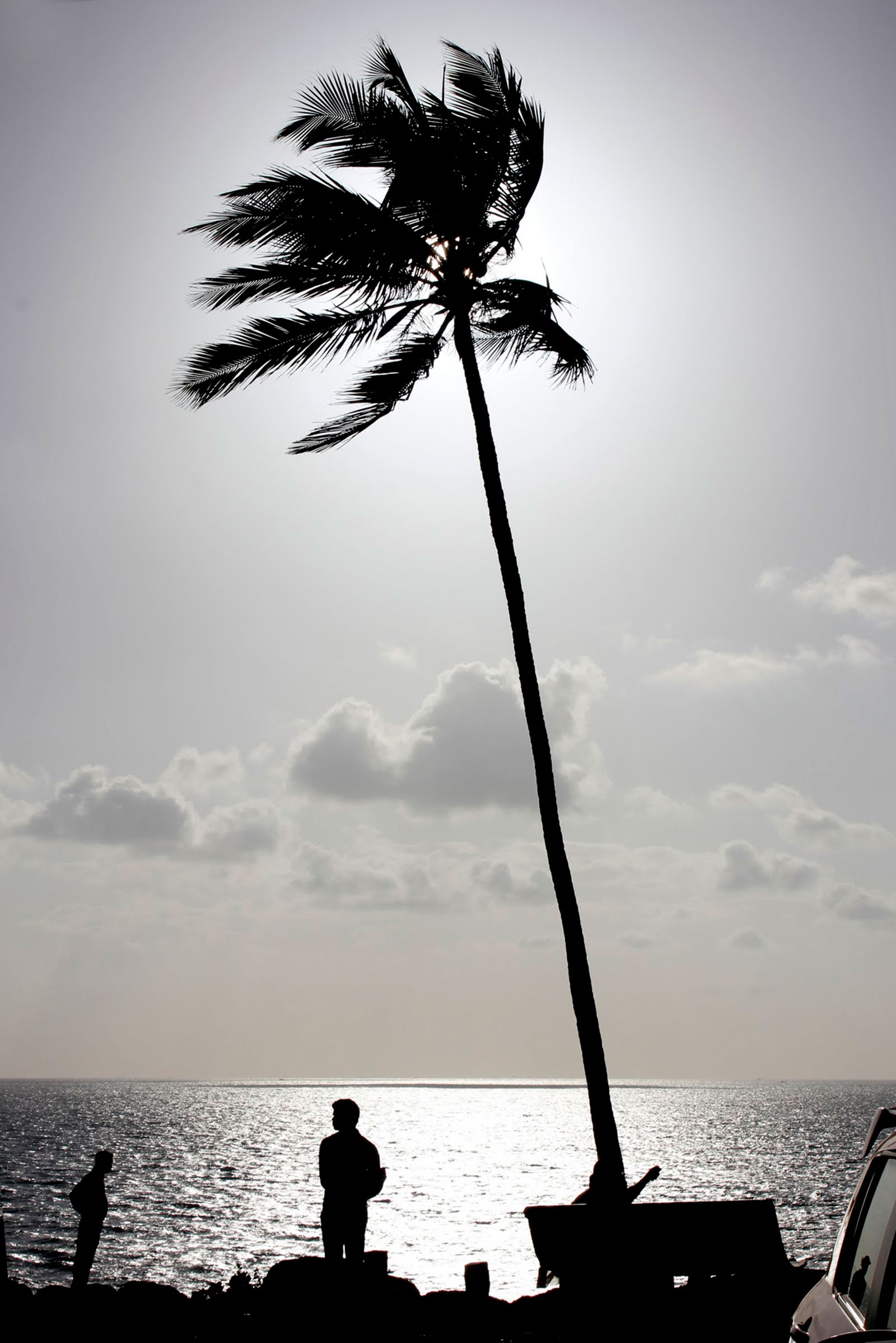 Black and white silhouette of man standing under coconut tree by the sea shore
